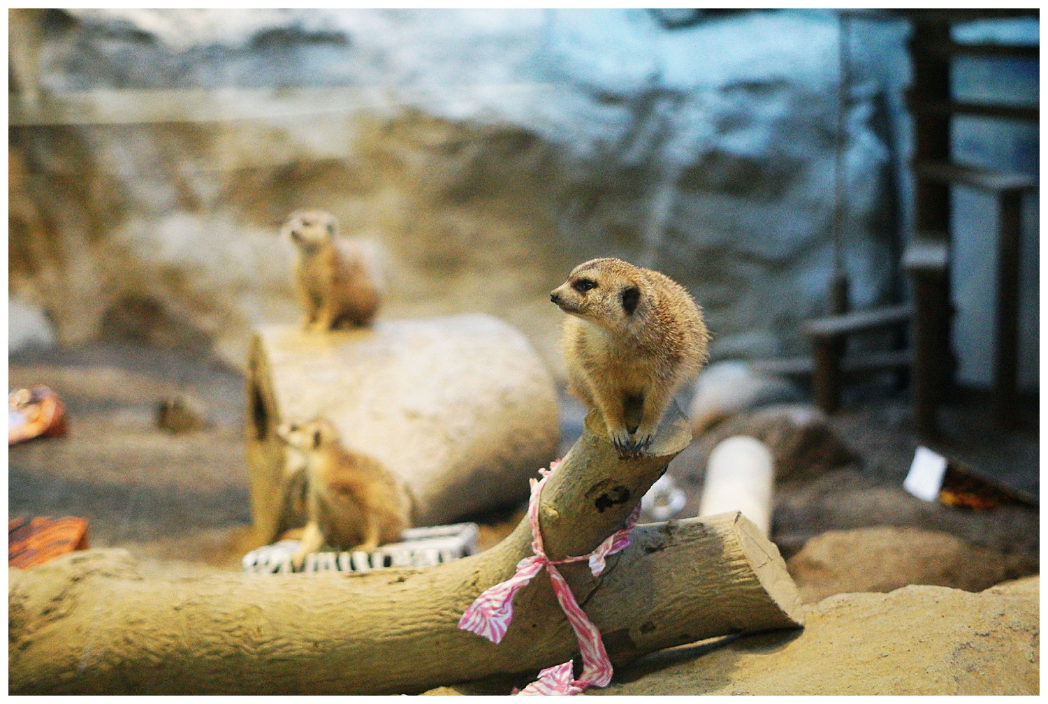 Opening Day at the Erie Zoo by Rachael Burgess